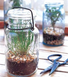 Garden in a jar!
