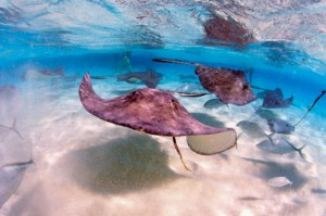 Stingrays!